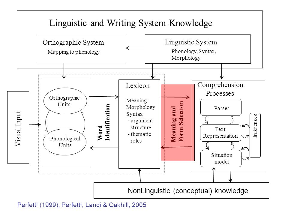 Visual Input Linguistic and Writing System Knowledge Linguistic System Phonology, Syntax, Morphology Orthographic System Mapping to phonology Orthographic Units Phonological Units Word Identification Lexicon Meaning Morphology Syntax - argument structure - thematic roles Meaning and Form Selection Parser Comprehension Processes Situation model Text Representation Inferences NonLinguistic (conceptual) knowledge Perfetti (1999); Perfetti, Landi & Oakhill, 2005