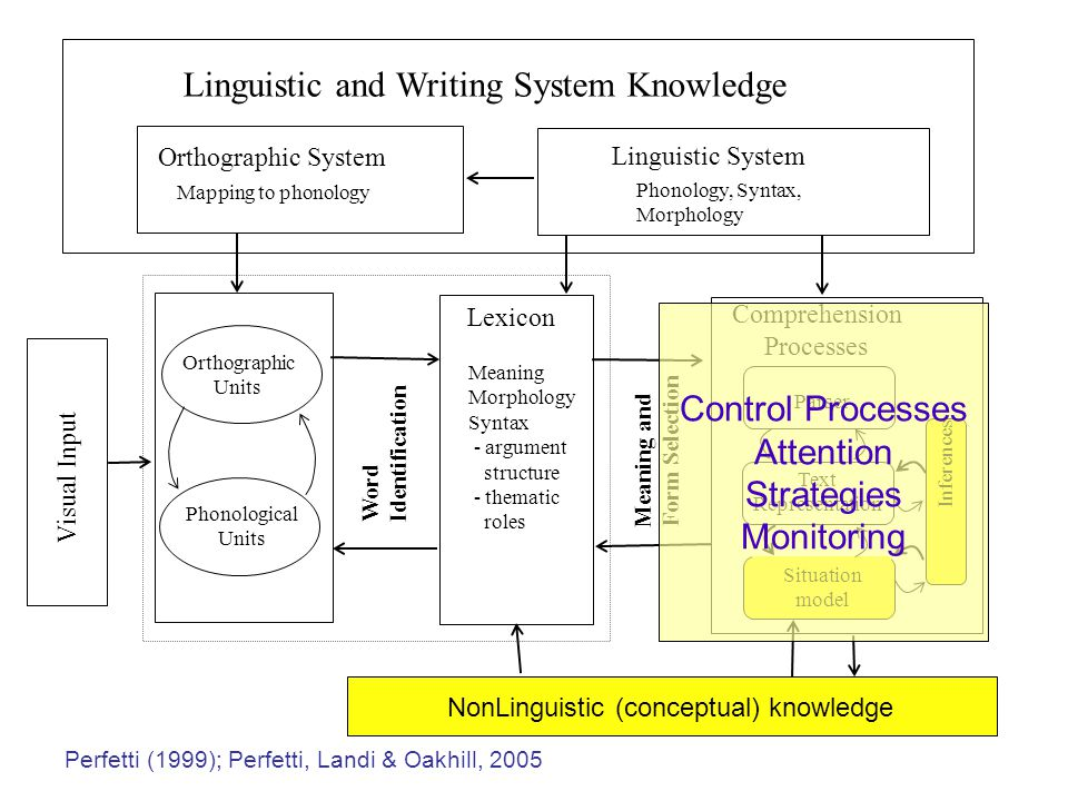 Visual Input Linguistic and Writing System Knowledge Linguistic System Phonology, Syntax, Morphology Orthographic System Mapping to phonology Orthographic Units Phonological Units Word Identification Lexicon Meaning Morphology Syntax - argument structure - thematic roles Meaning and Form Selection Parser Comprehension Processes Situation model Text Representation Inferences NonLinguistic (conceptual) knowledge Control Processes Attention Strategies Monitoring Perfetti (1999); Perfetti, Landi & Oakhill, 2005