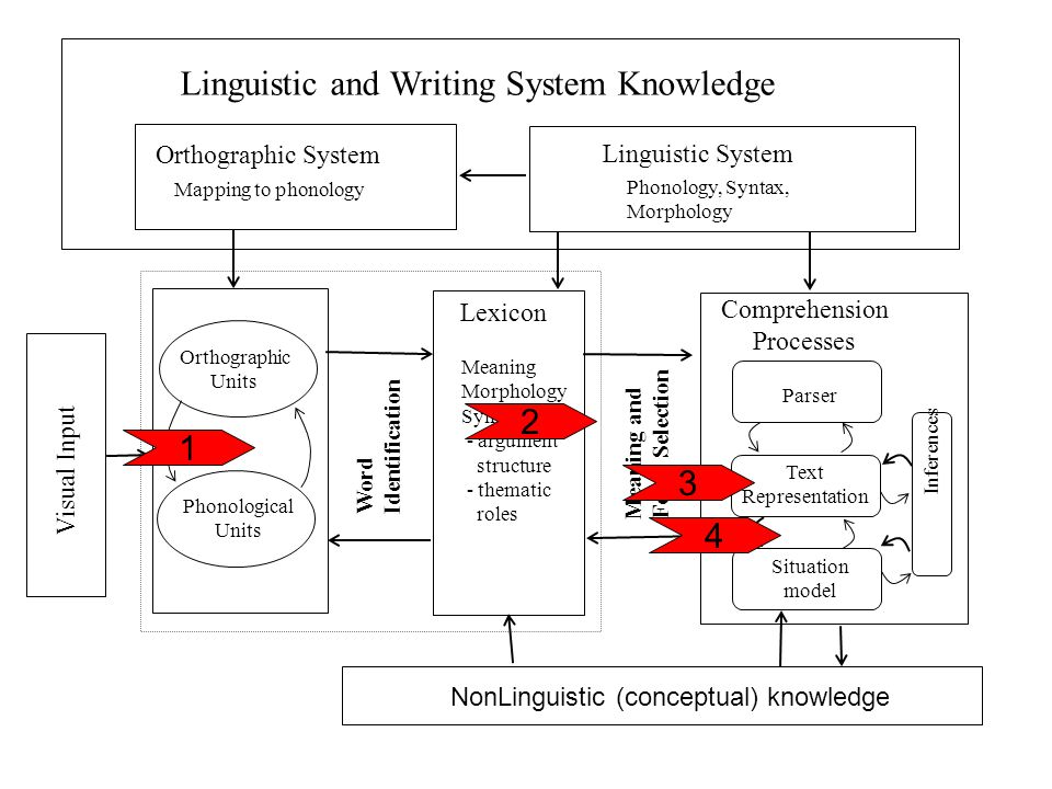 Visual Input Linguistic and Writing System Knowledge Linguistic System Phonology, Syntax, Morphology Orthographic System Mapping to phonology Orthographic Units Phonological Units Word Identification Lexicon Meaning Morphology Syntax - argument structure - thematic roles Meaning and Form Selection Parser Comprehension Processes Situation model Text Representation Inferences 1 4 3 2 NonLinguistic (conceptual) knowledge