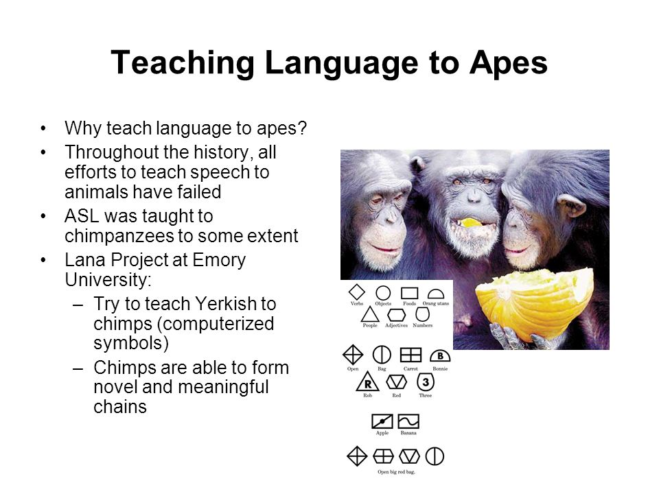 Teaching Language to Apes Why teach language to apes.