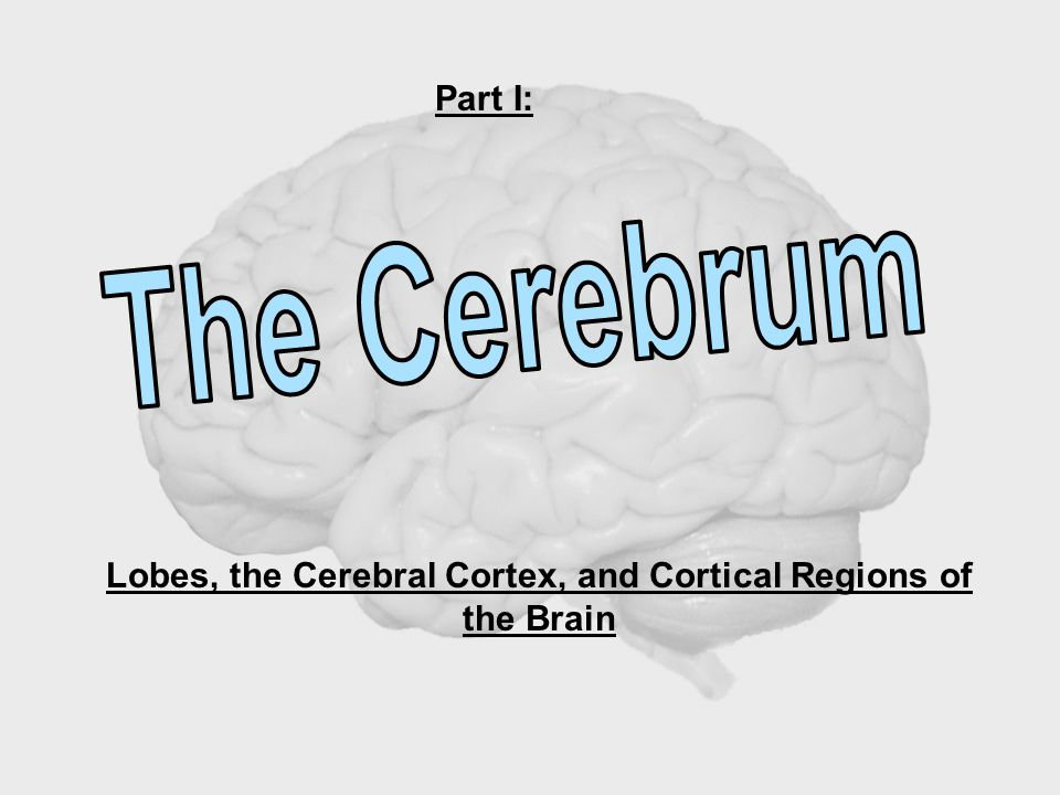Part I: Lobes, the Cerebral Cortex, and Cortical Regions of the Brain