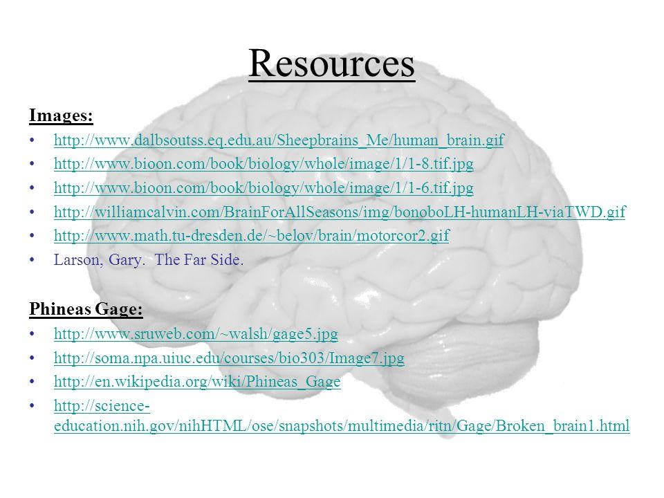 Resources Images: http://www.dalbsoutss.eq.edu.au/Sheepbrains_Me/human_brain.gif http://www.bioon.com/book/biology/whole/image/1/1-8.tif.jpg http://ww
