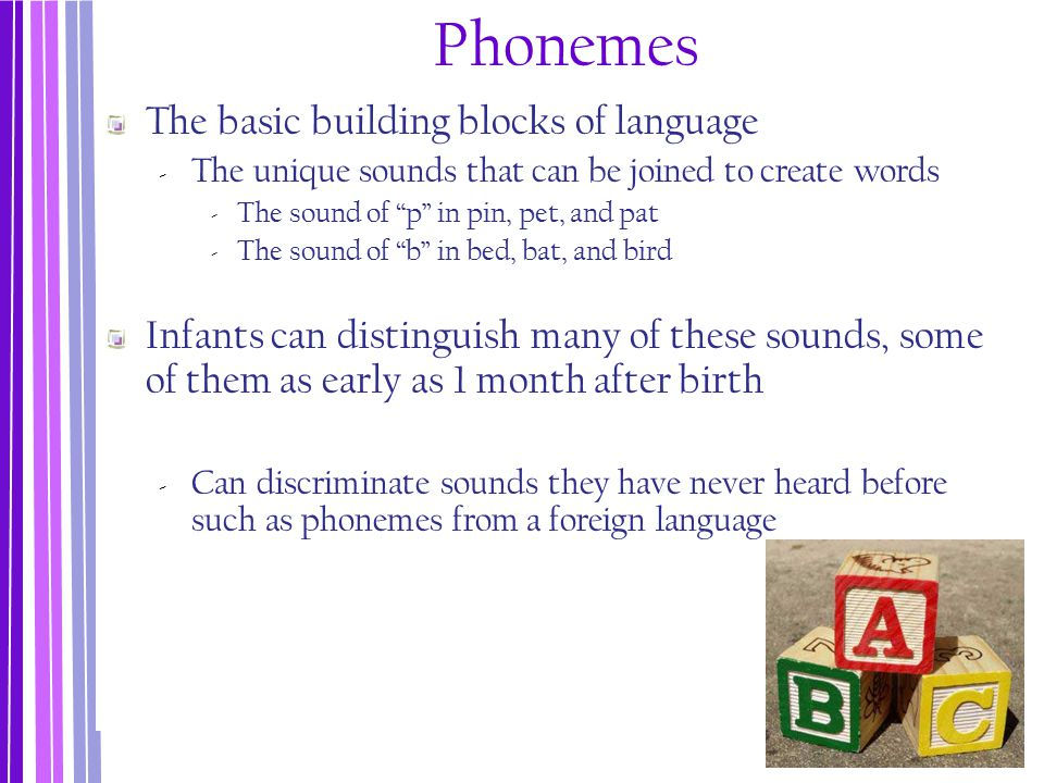 The language environment for infants is not solely auditory.