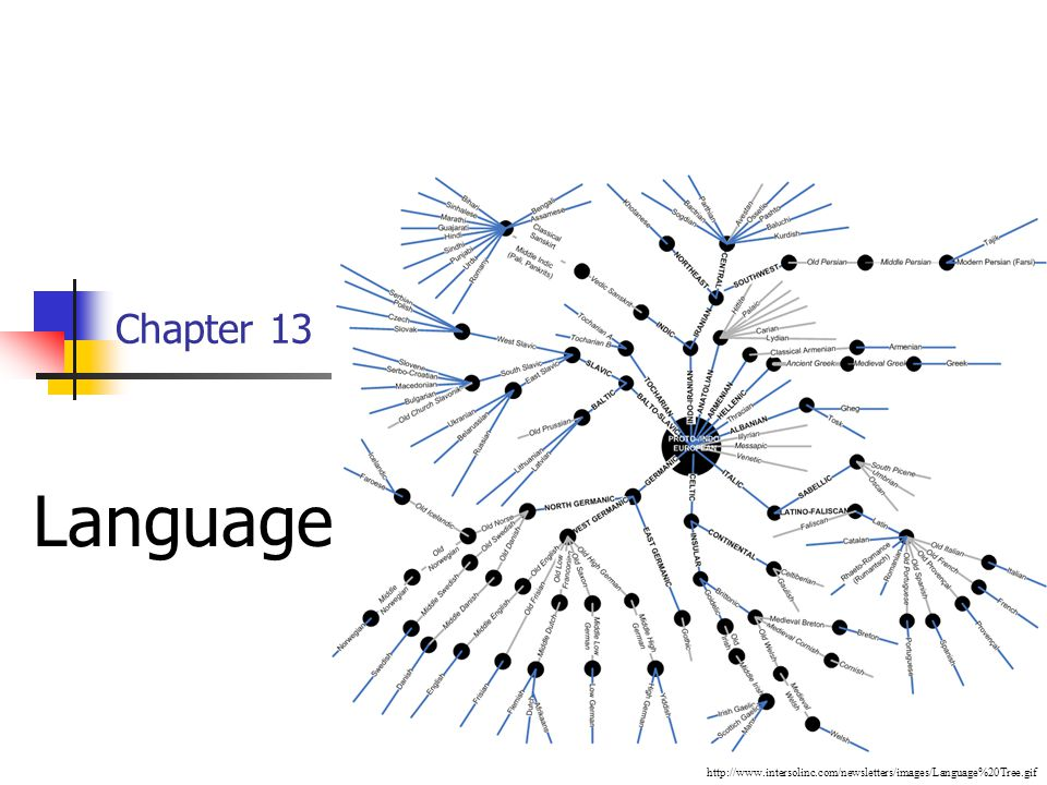 Chapter 13 Language http://www.intersolinc.com/newsletters/images/Language%20Tree.gif
