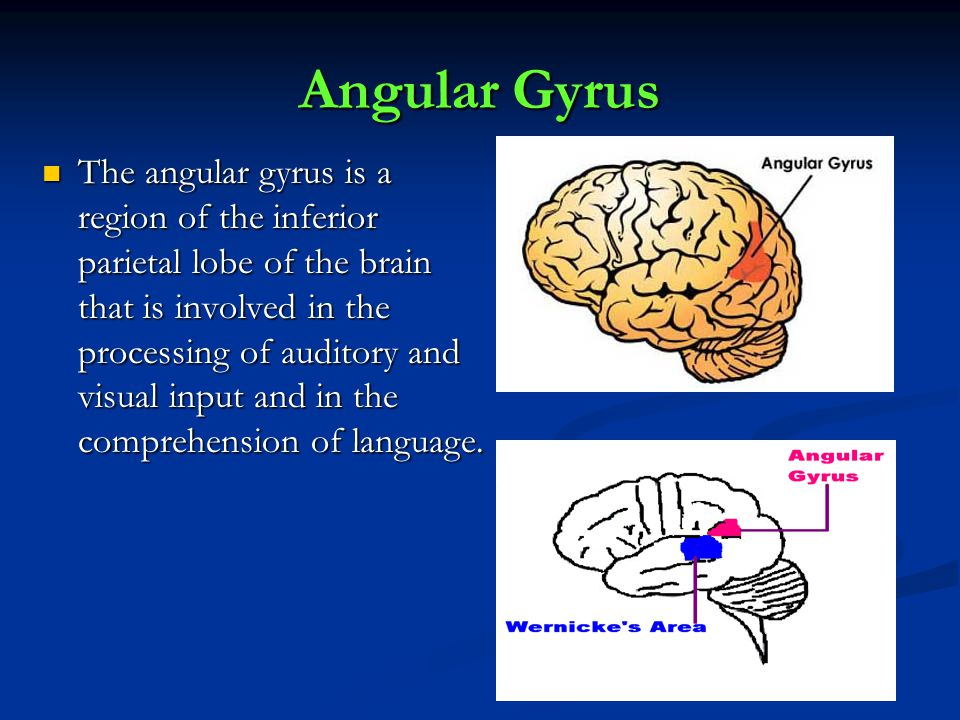 Angular Gyrus The angular gyrus is a region of the inferior parietal lobe of the brain that is involved in the processing of auditory and visual input and in the comprehension of language.