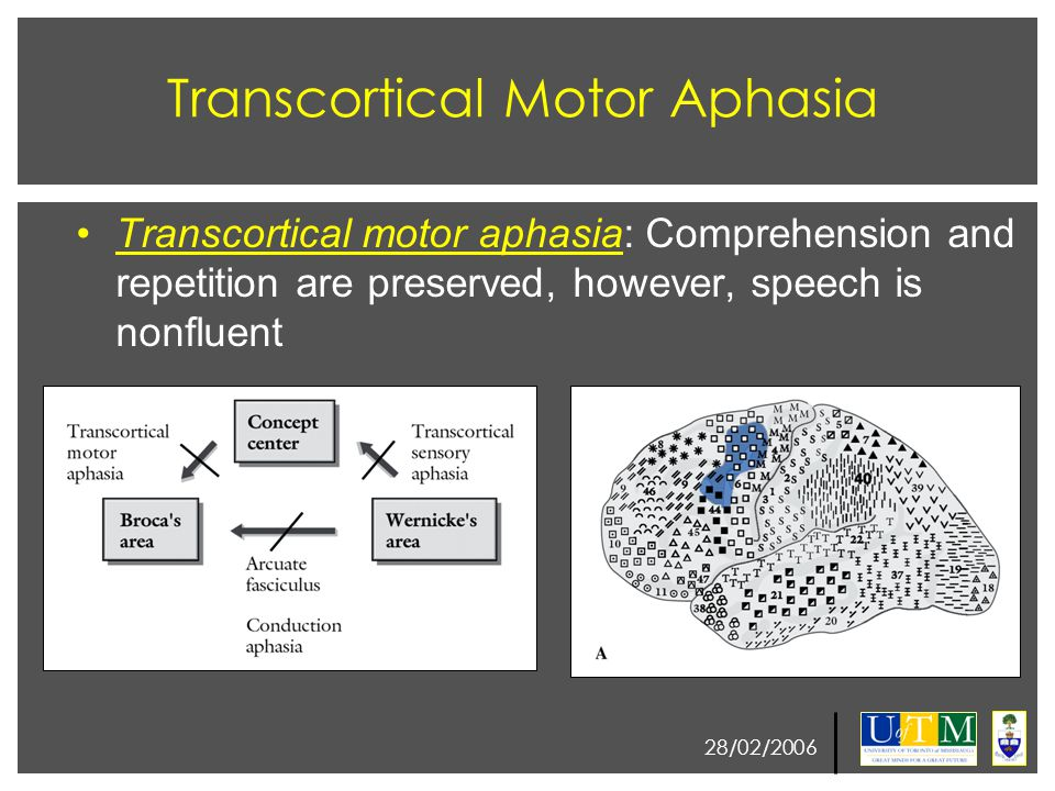 28/02/2006 Transcortical Motor Aphasia Transcortical motor aphasia: Comprehension and repetition are preserved, however, speech is nonfluent