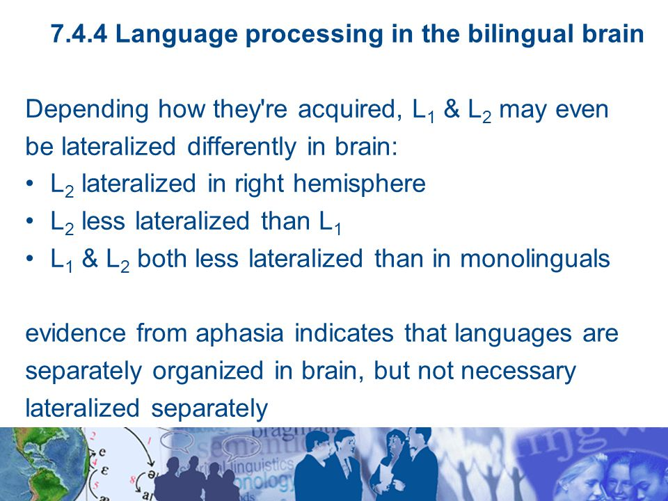 7.4.4 Language processing in the bilingual brain Depending how they re acquired, L 1 & L 2 may even be lateralized differently in brain: L 2 lateralized in right hemisphere L 2 less lateralized than L 1 L 1 & L 2 both less lateralized than in monolinguals evidence from aphasia indicates that languages are separately organized in brain, but not necessary lateralized separately
