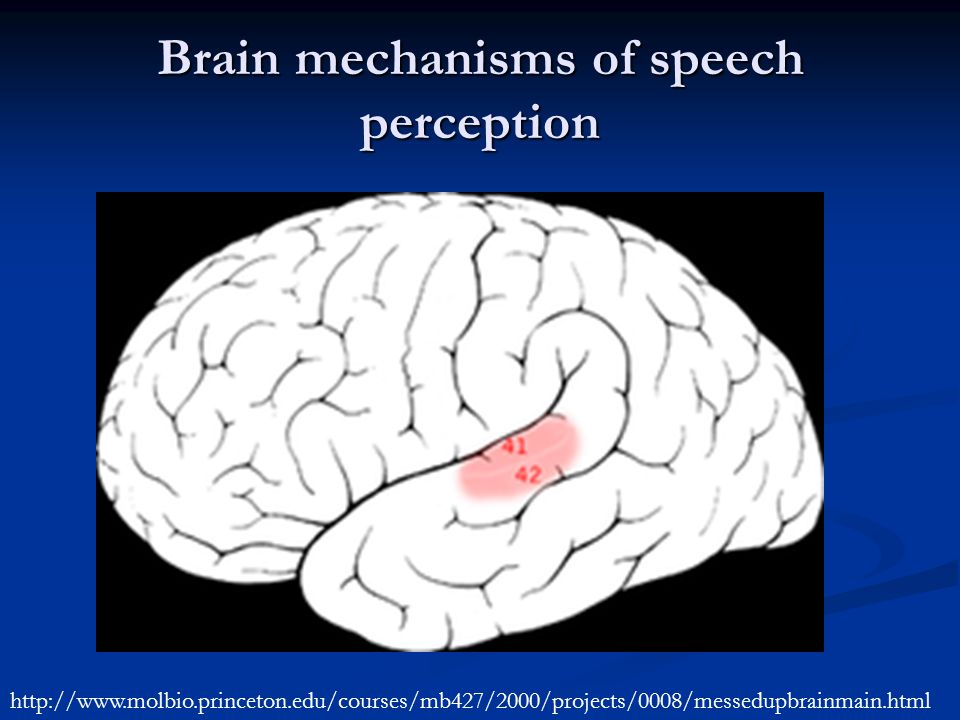 Brain mechanisms of speech perception http://www.molbio.princeton.edu/courses/mb427/2000/projects/0008/messedupbrainmain.html