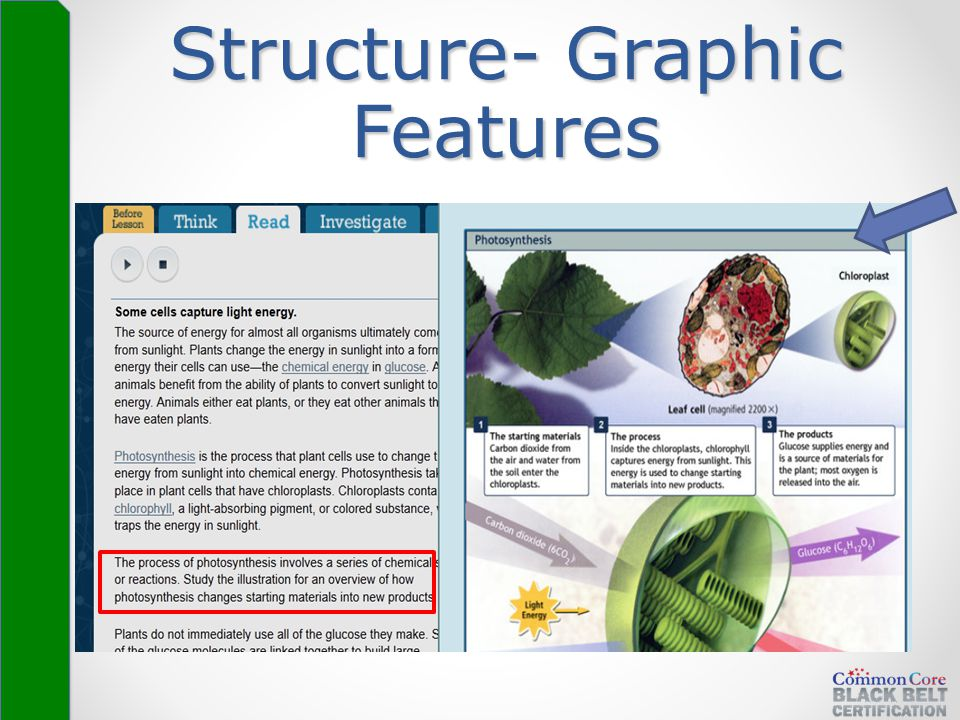 Structure- Graphic Features