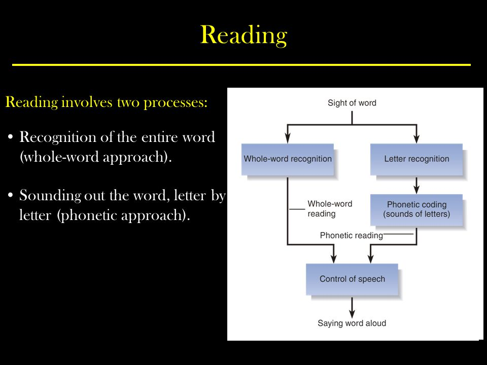 Reading Reading involves two processes: Recognition of the entire word (whole-word approach).