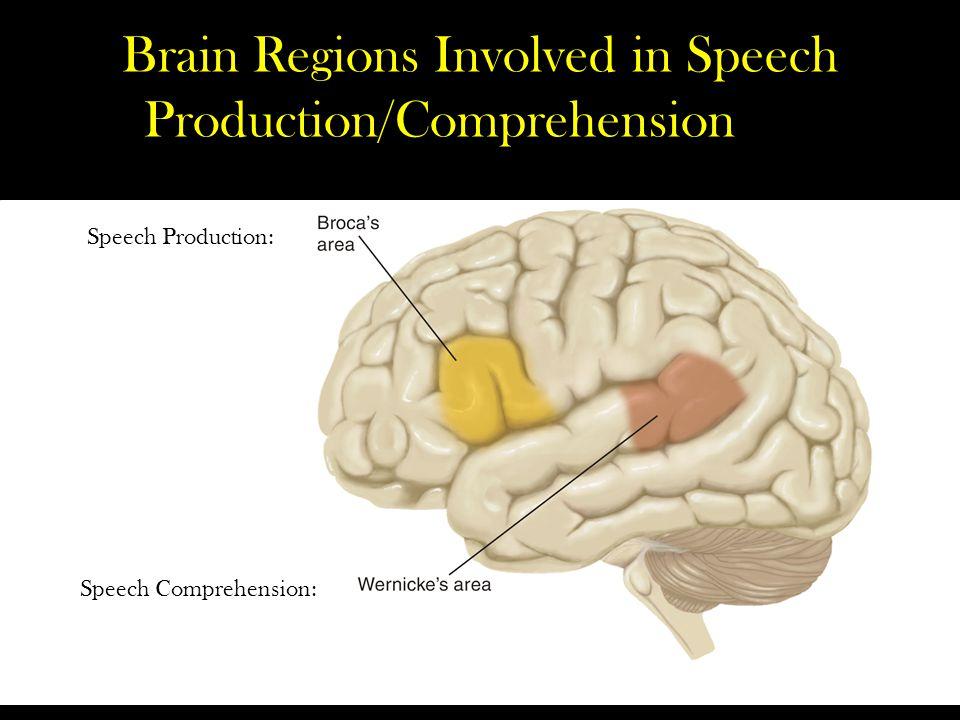 Brain Regions Involved in Speech Production/Comprehension Speech Production: Speech Comprehension: