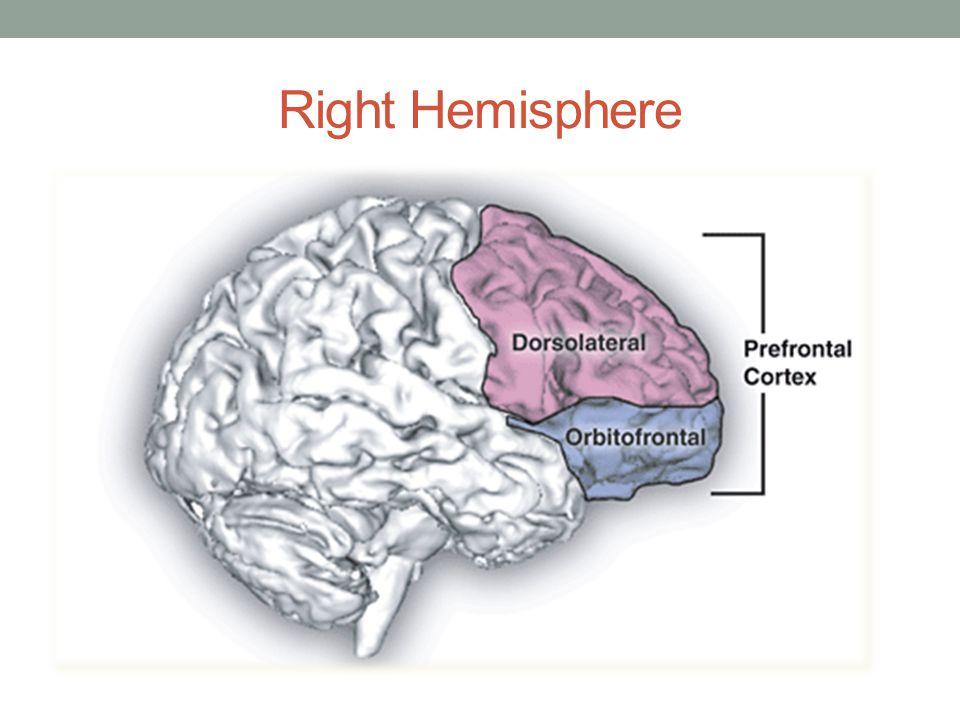 Right Hemisphere