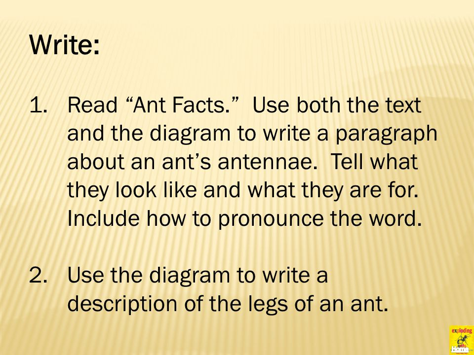Write: 1.Read Ant Facts. Use both the text and the diagram to write a paragraph about an ant's antennae.