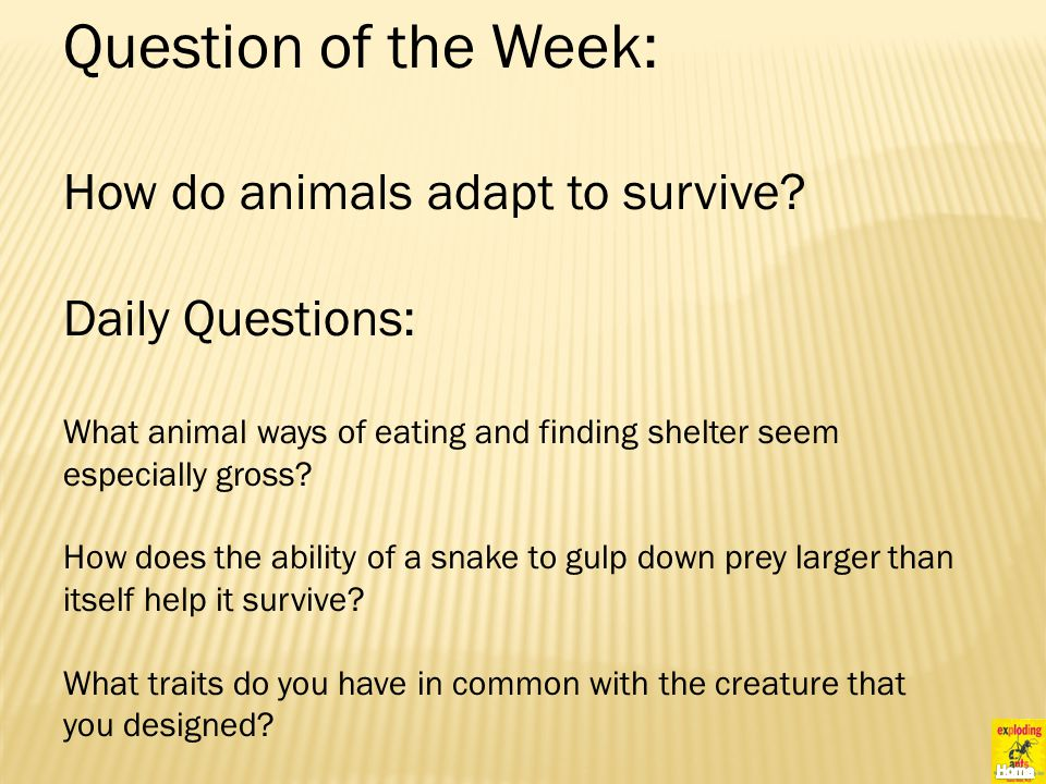 Question of the Week: How do animals adapt to survive.