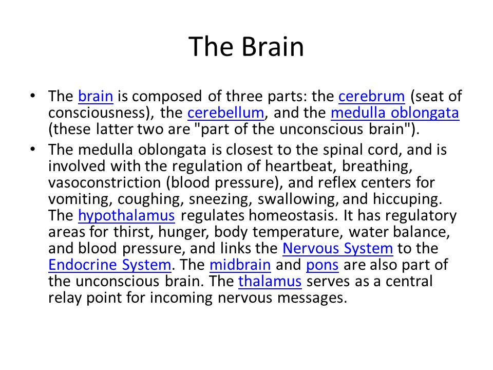 The Brain The brain is composed of three parts: the cerebrum (seat of consciousness), the cerebellum, and the medulla oblongata (these latter two are