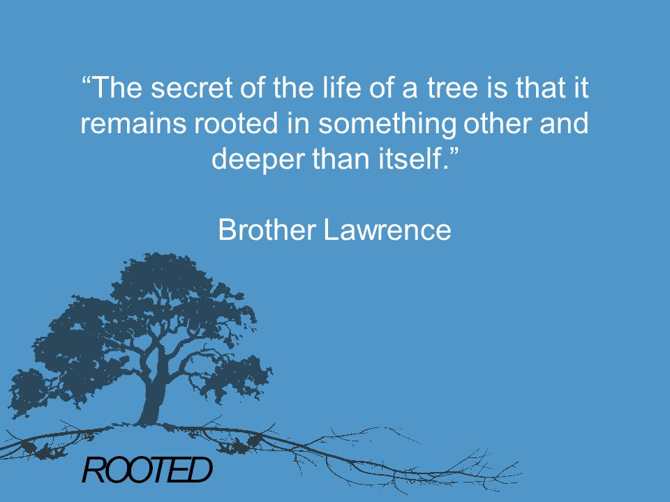 """""""The secret of the life of a tree is that it remains rooted in something other and deeper than itself."""" Brother Lawrence"""