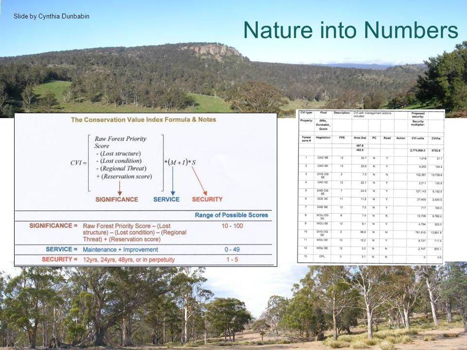 Nature into Numbers Slide by Cynthia Dunbabin
