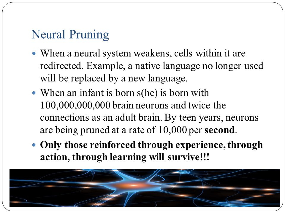 Neural Pruning When a neural system weakens, cells within it are redirected.