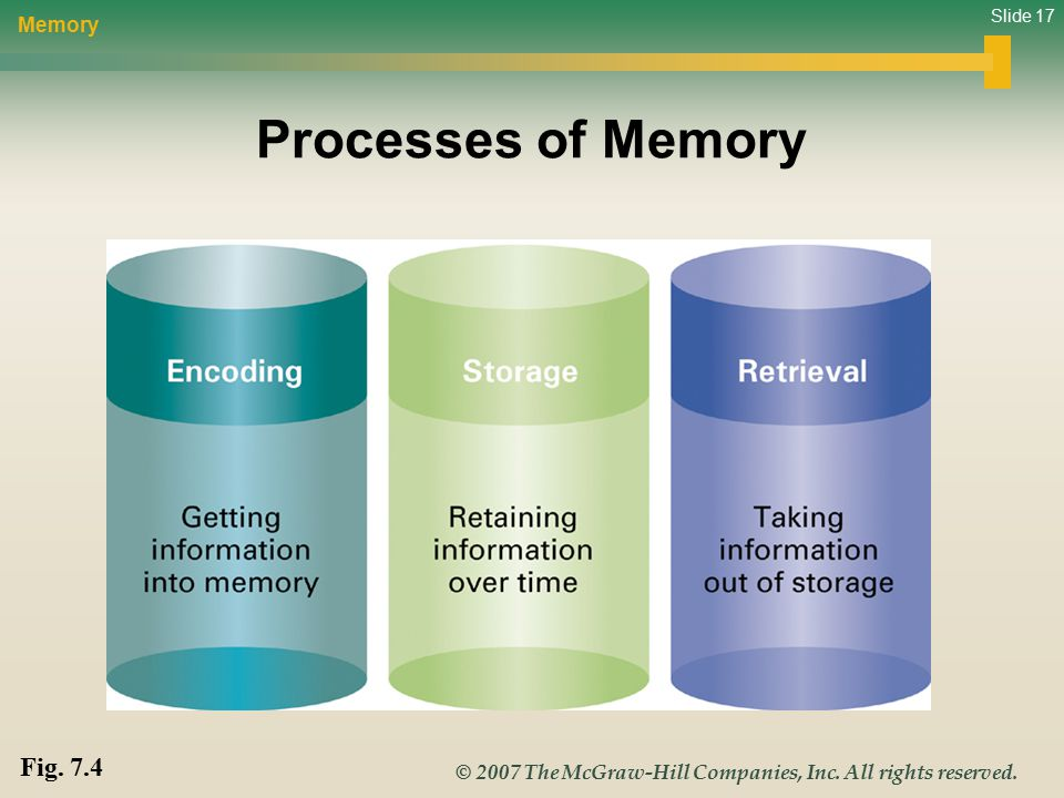 Slide 17 © 2007 The McGraw-Hill Companies, Inc. All rights reserved. Processes of Memory Memory Fig. 7.4