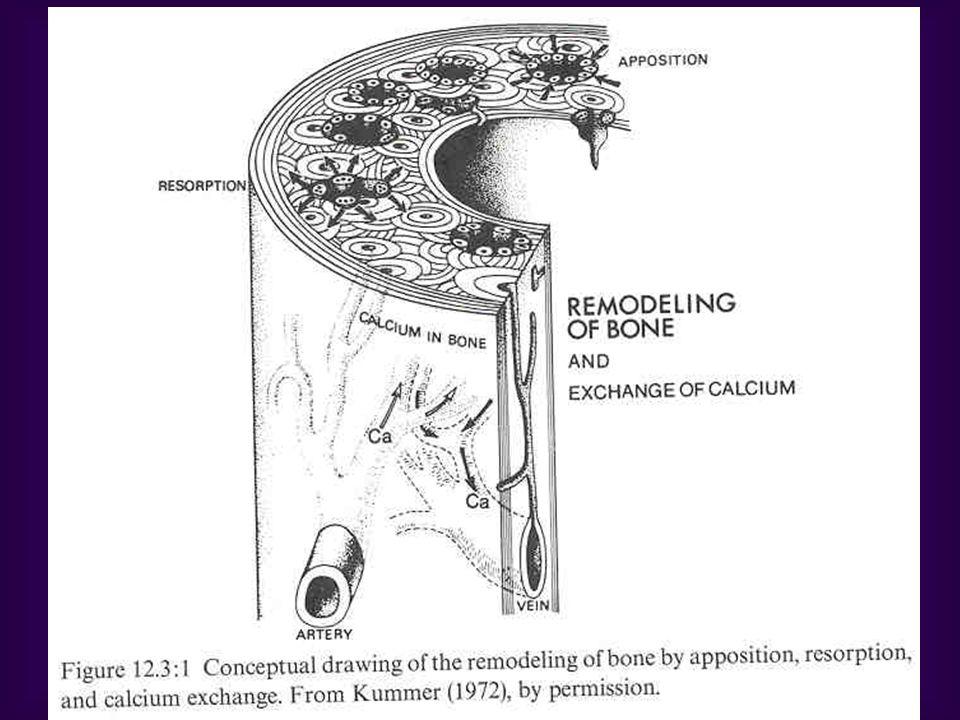 I: bone vs glass and metal II: Anisotropic behavior of bone