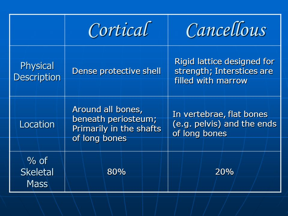 CorticalCancellous Physical Description Dense protective shell Rigid lattice designed for strength; Interstices are filled with marrow Location Around all bones, beneath periosteum; Primarily in the shafts of long bones In vertebrae, flat bones (e.g.