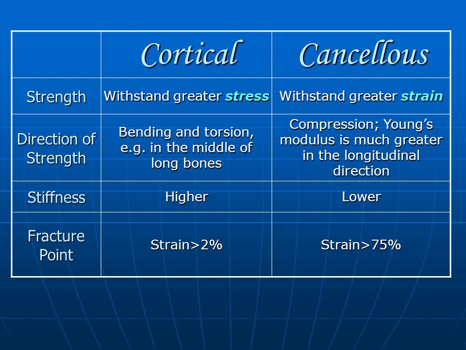CorticalCancellous Strength Withstand greater stress Withstand greater strain Direction of Strength Bending and torsion, e.g.