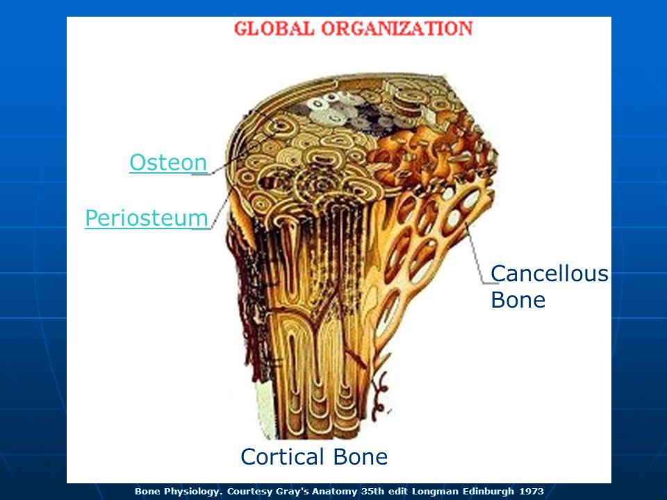 Bone Physiology.