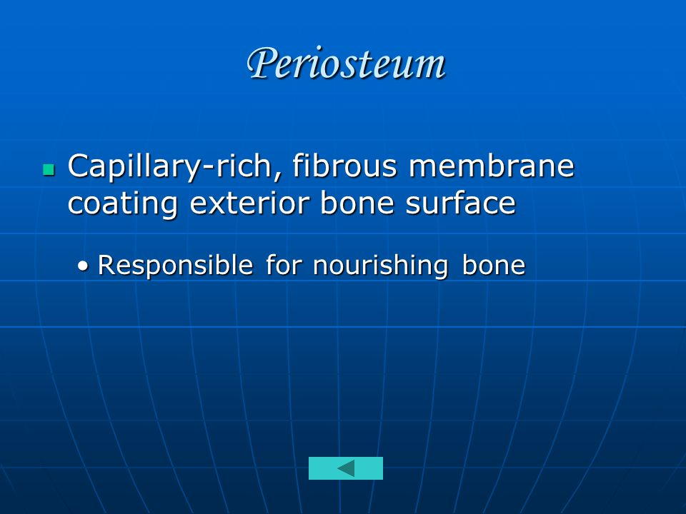 Periosteum Capillary-rich, fibrous membrane coating exterior bone surface Capillary-rich, fibrous membrane coating exterior bone surface Responsible for nourishing boneResponsible for nourishing bone