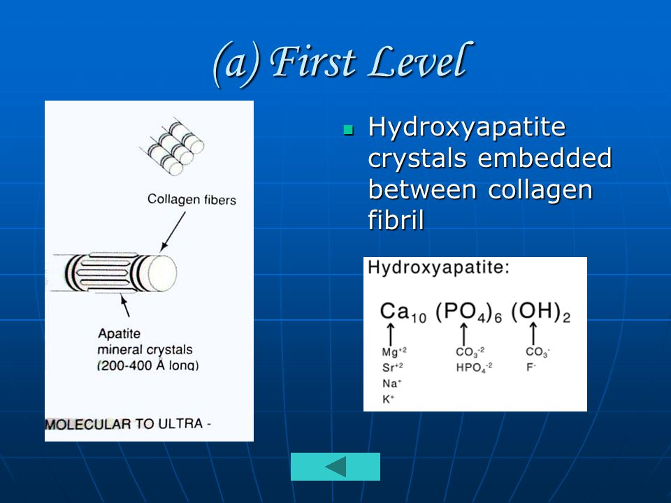 (a) First Level Hydroxyapatite crystals embedded between collagen fibril Hydroxyapatite crystals embedded between collagen fibril