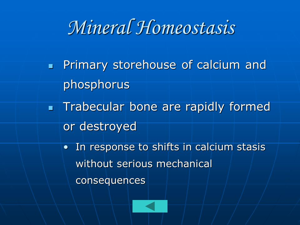Mineral Homeostasis Primary storehouse of calcium and phosphorus Primary storehouse of calcium and phosphorus Trabecular bone are rapidly formed or destroyed Trabecular bone are rapidly formed or destroyed In response to shifts in calcium stasis without serious mechanical consequencesIn response to shifts in calcium stasis without serious mechanical consequences