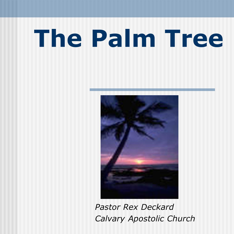 The Palm Tree Pastor Rex Deckard Calvary Apostolic Church