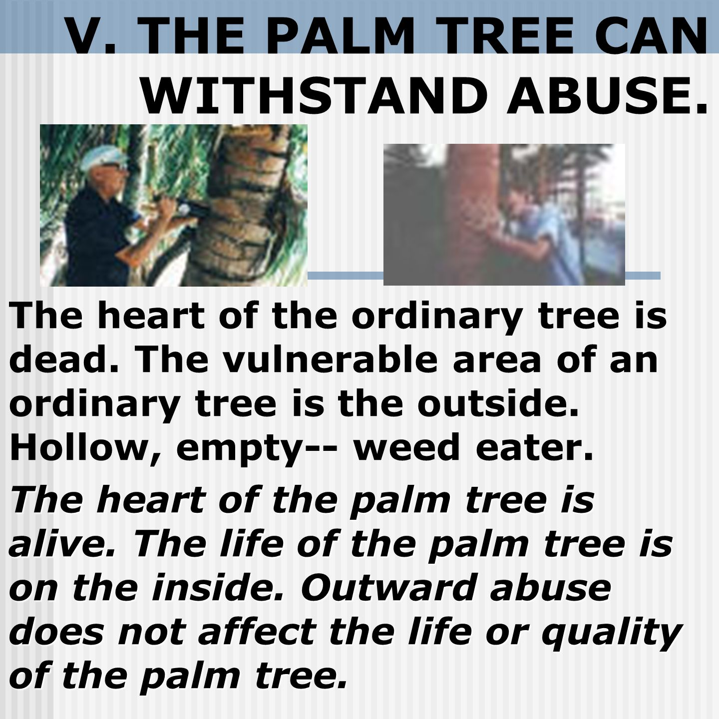 V. THE PALM TREE CAN WITHSTAND ABUSE. The heart of the ordinary tree is dead.