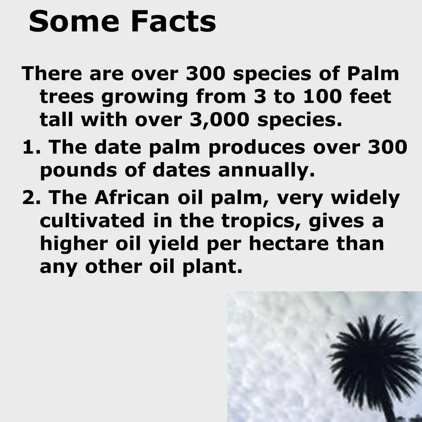 Some Facts There are over 300 species of Palm trees growing from 3 to 100 feet tall with over 3,000 species.