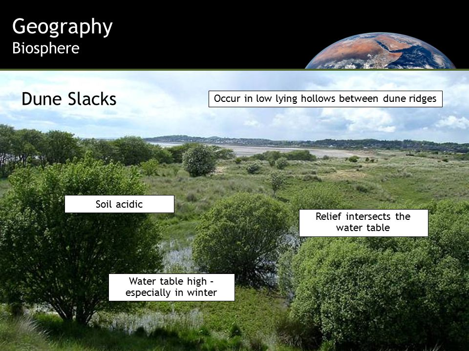 Geography Biosphere Relief intersects the water table Water table high – especially in winter Soil acidic Occur in low lying hollows between dune ridges Dune Slacks