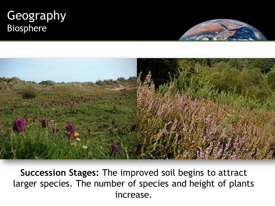 Geography Biosphere Succession Stages: The improved soil begins to attract larger species.