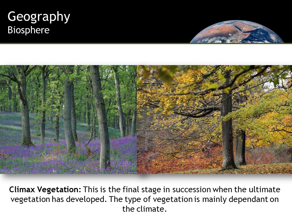 Geography Biosphere Climax Vegetation: This is the final stage in succession when the ultimate vegetation has developed.