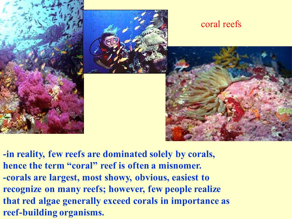 -in reality, few reefs are dominated solely by corals, hence the term coral reef is often a misnomer.