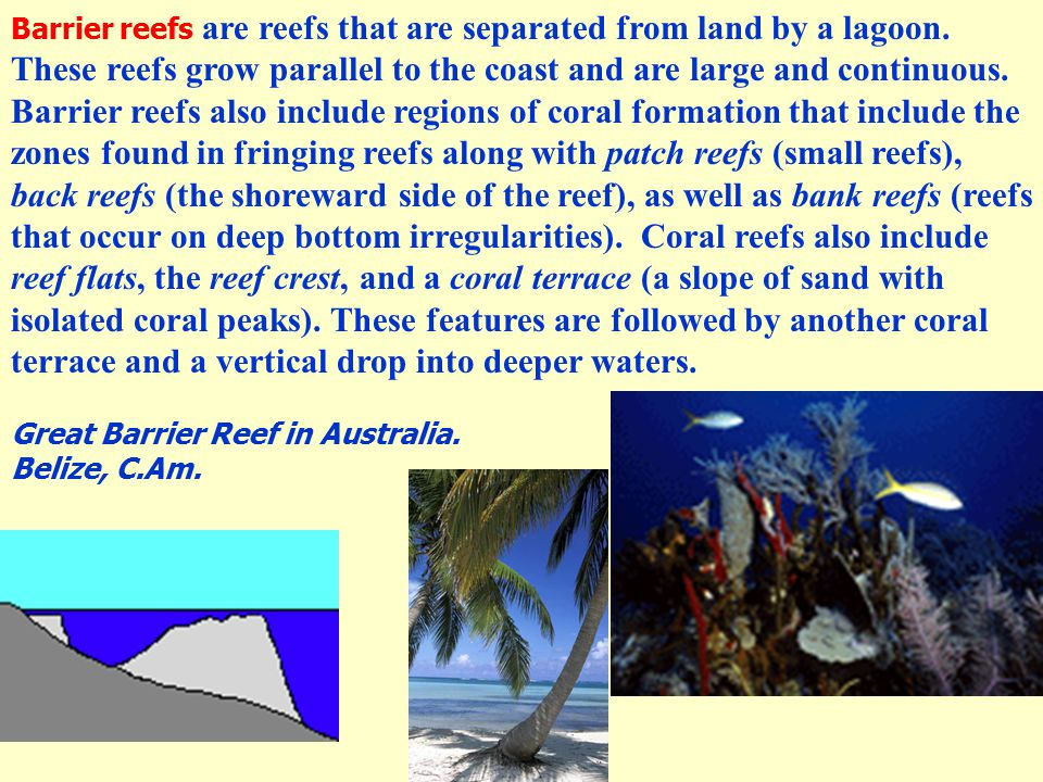 Barrier reefs are reefs that are separated from land by a lagoon. These reefs grow parallel to the coast and are large and continuous. Barrier reefs a