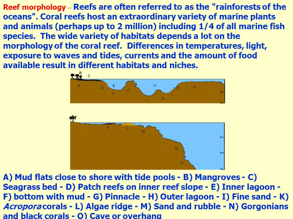 Reef morphology -- Reefs are often referred to as the rainforests of the oceans .