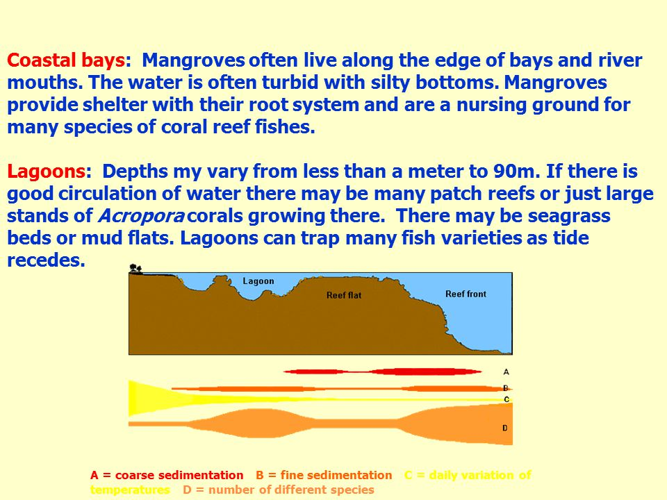 Coastal bays: Mangroves often live along the edge of bays and river mouths.