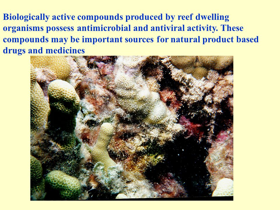 Biologically active compounds produced by reef dwelling organisms possess antimicrobial and antiviral activity.