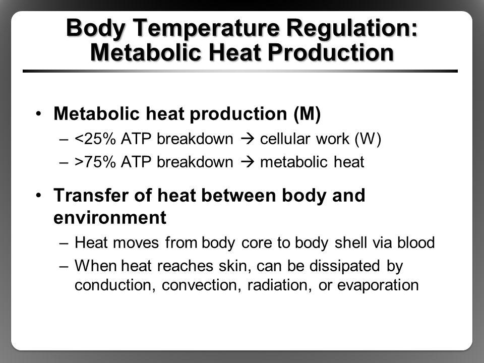 Body Temperature Regulation: Metabolic Heat Production Metabolic heat production (M) –<25% ATP breakdown  cellular work (W) –>75% ATP breakdown  met