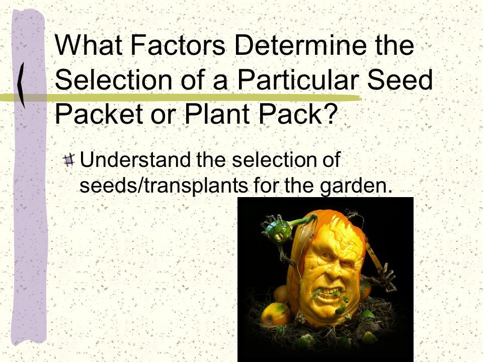 What Factors Determine the Selection of a Particular Seed Packet or Plant Pack? Understand the selection of seeds/transplants for the garden.