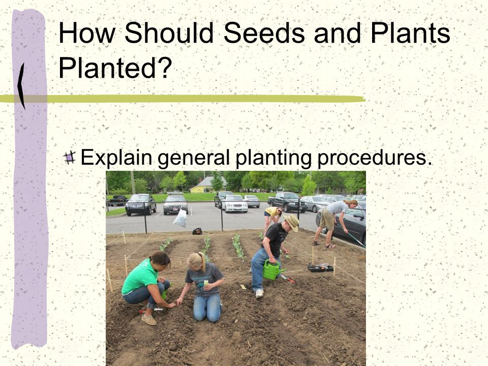How Should Seeds and Plants Planted? Explain general planting procedures.