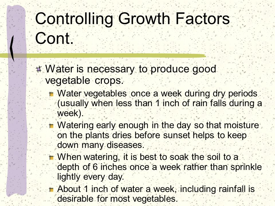Controlling Growth Factors Cont. Water is necessary to produce good vegetable crops. Water vegetables once a week during dry periods (usually when les