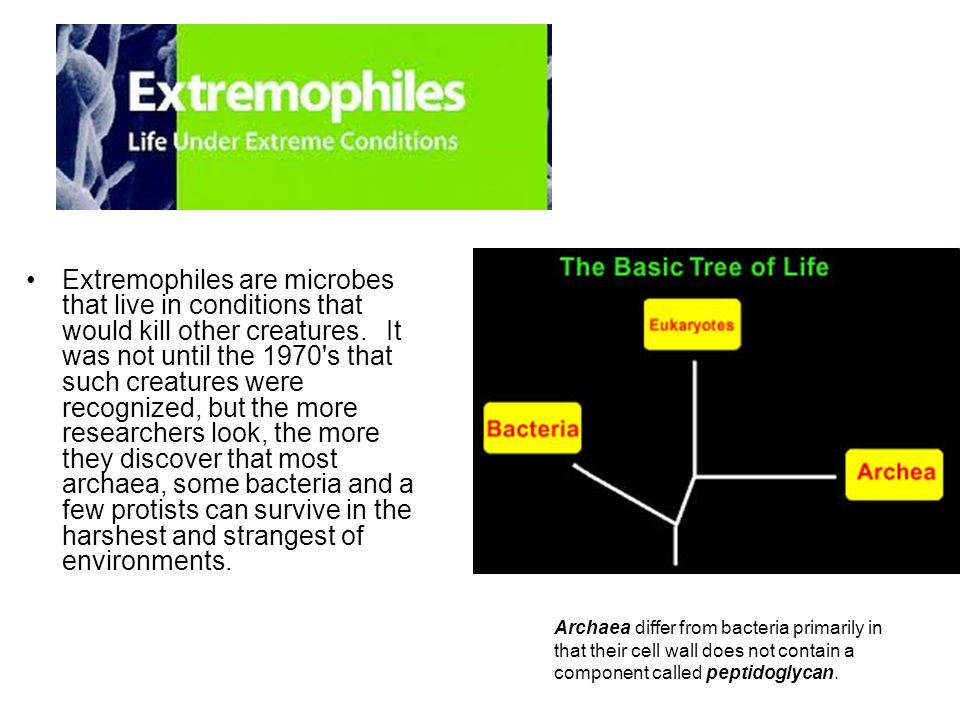 Extremophiles are microbes that live in conditions that would kill other creatures.