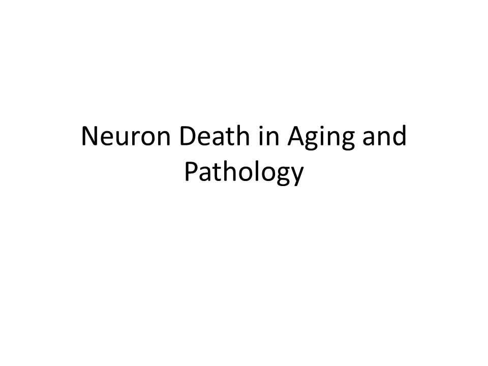 Neuron Death in Aging and Pathology