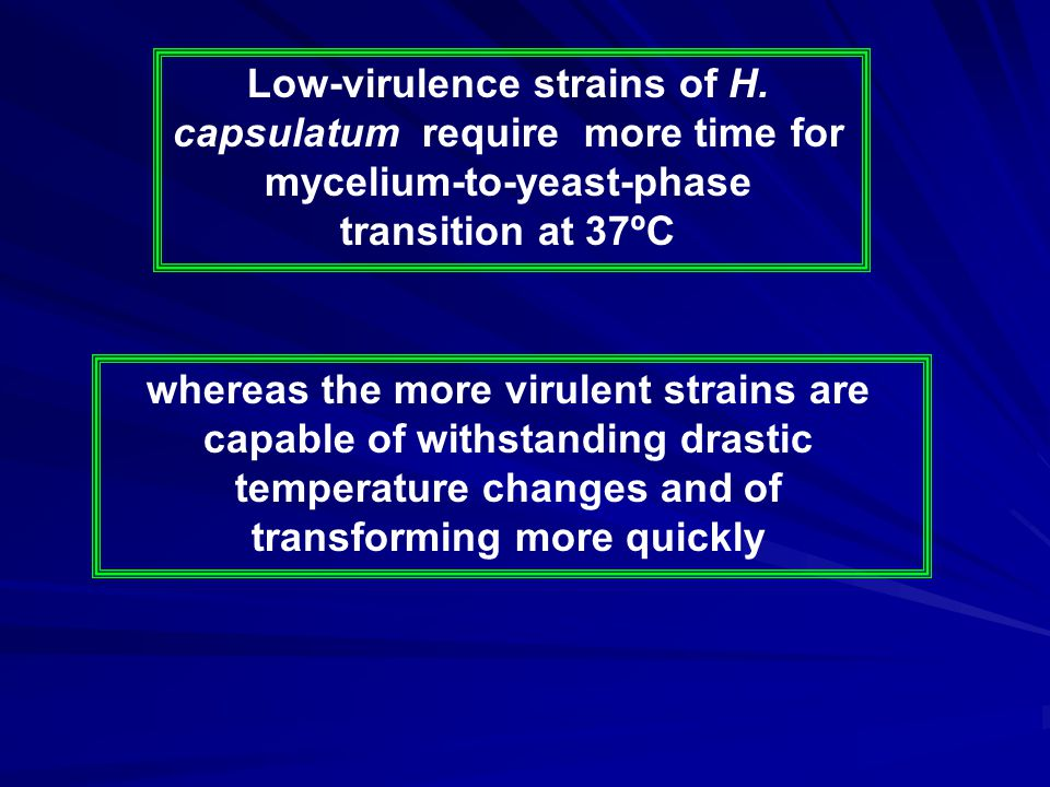 Low-virulence strains of H. capsulatum require more time for mycelium-to-yeast-phase transition at 37ºC whereas the more virulent strains are capable