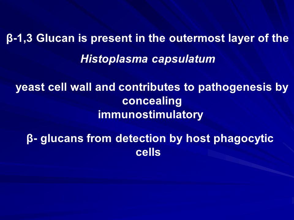 β-1,3 Glucan is present in the outermost layer of the Histoplasma capsulatum yeast cell wall and contributes to pathogenesis by concealing immunostimulatory β- glucans from detection by host phagocytic cells