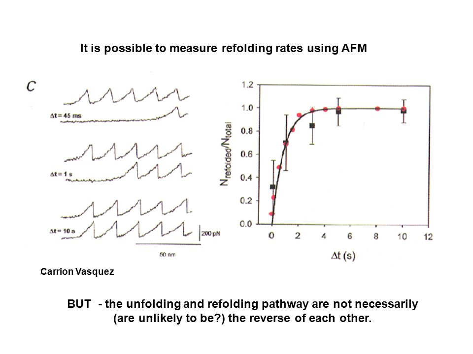 Carrion Vasquez It is possible to measure refolding rates using AFM BUT - the unfolding and refolding pathway are not necessarily (are unlikely to be ) the reverse of each other.